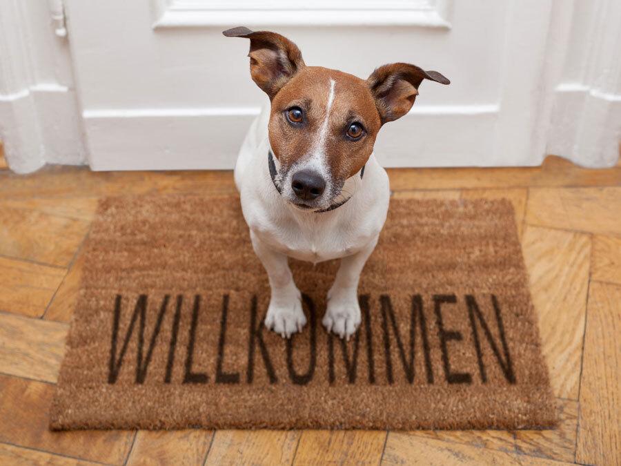 """Ein Hund sitzt auf einer Fußmatte mit der Aufschrift """"Willkommen"""" vor einer Wohnungstür. Darf der Vermieter die Haustierhaltung verbieten?"""